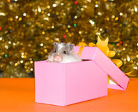 Christmas's gift for curiosity hamster Stock Photography