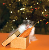 Christmas's gift for curiosity hamster Royalty Free Stock Photo
