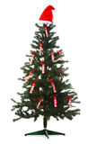 Christmas sale. Image of Christmas fir tree decorated with red labels of sale and santa cap on its top stock images