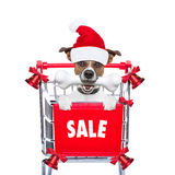 Christmas sale dog Royalty Free Stock Image