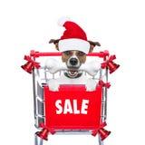 Christmas sale dog Royalty Free Stock Image