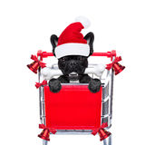 Christmas sale dog Stock Images