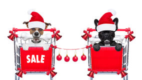 Christmas sale dogs Royalty Free Stock Photos