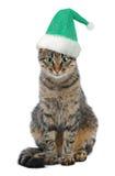Christmas Santa cat Royalty Free Stock Photo
