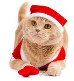 Christmas santa cat carrying gifts in the bag Royalty Free Stock Photos