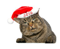 Christmas Santa cat. Royalty Free Stock Photography