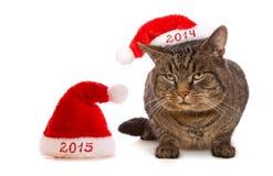 Christmas Santa cat. Royalty Free Stock Photos