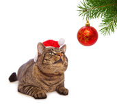 Christmas Santa cat and decoration. Stock Photos