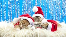 Christmas Santa Cat stock video footage