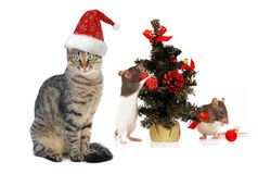 Christmas Santa cat and rat Stock Images