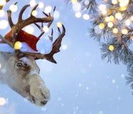 Christmas Santa Claus deer Royalty Free Stock Image