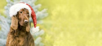 Christmas Santa Claus dog banner, greeting card idea Stock Photography