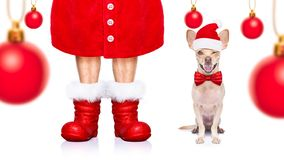 Christmas santa claus dog royalty free stock photos