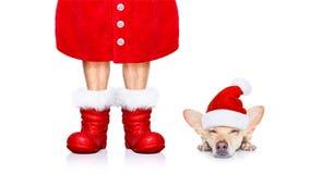 Christmas santa claus dog stock images