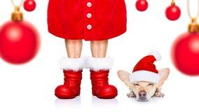 Christmas santa claus dog stock photography