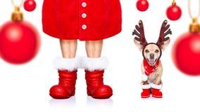 Christmas santa claus dog royalty free stock photo