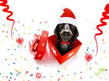 Christmas santa claus dog stock photos