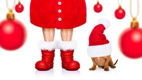 Christmas santa claus dog royalty free stock photography