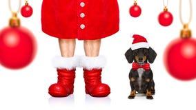 Christmas santa claus dog royalty free stock image