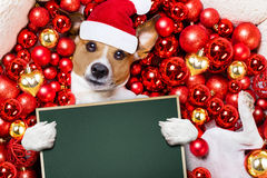 Christmas santa claus dog and xmas balls as background Royalty Free Stock Photos
