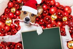 Christmas santa claus dog and xmas balls as background stock photography