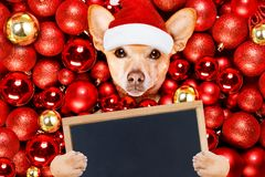 Christmas santa claus dog and xmas balls stock photos