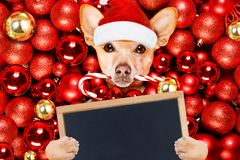 Christmas santa claus dog and xmas balls stock photo