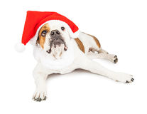 Christmas Santa Dog With Blank Sign Stock Photos