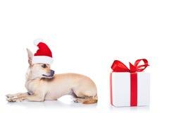 Christmas santa dog Stock Photos