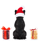 Christmas santa dog. French bulldog dog with red  christmas santa claus hat  for xmas holidays from behind and back torso with  cookies and biscuits Stock Image