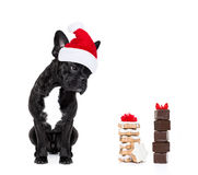 Christmas santa dog Stock Photo
