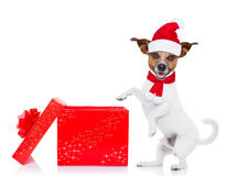 Christmas santa dog Royalty Free Stock Image