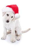 Christmas Santa Dog Stock Photos