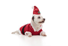 Christmas santa dog looking sideways. Low angle of a small white maltese wearing a red santa coat and hat.  Dog is looking sideways at perhaps your message Stock Photos