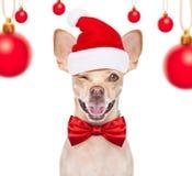 Christmas santa dogs stock photos