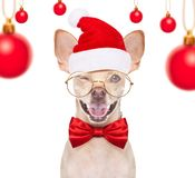 Christmas santa dogs royalty free stock image