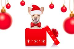 Christmas santa dogs stock photography