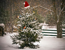 Christmas scene. Stock Photo