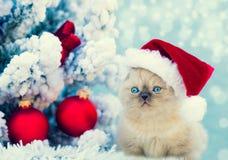 Little kitten wearing Santa Claus hat royalty free stock photos