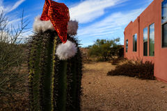 Christmas scenes, Santa Claus hat on cactus in desert Royalty Free Stock Images