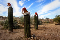 Christmas scenes, 3 Santa Claus hats on cactus in desert Royalty Free Stock Photo