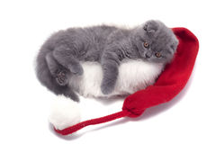 Christmas scottish fold kitty. Laying in Santa hat royalty free stock photography