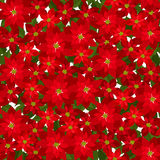 Christmas seamless background with red poinsettia  Royalty Free Stock Photography