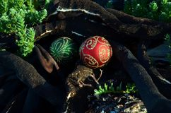Christmas in seaweed, red and green Christmas spheres with glitter decorations, dry seaweed, black driftwood Christmas in July Stock Image
