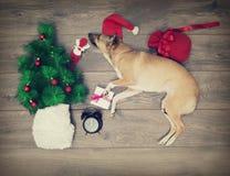 Christmas set, dog Stock Photos