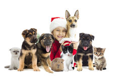 Christmas set of pets. On a white background Royalty Free Stock Photo