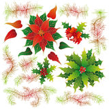 Christmas set of plants with flowers Royalty Free Stock Image