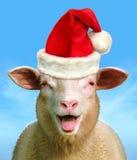 Christmas sheep royalty free stock image