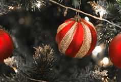 Christmas Silver red ball hanging on a beautiful Christmas tree. Surrounded by red shinning ball Stock Image