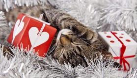 Christmas sleeping cat stock photos